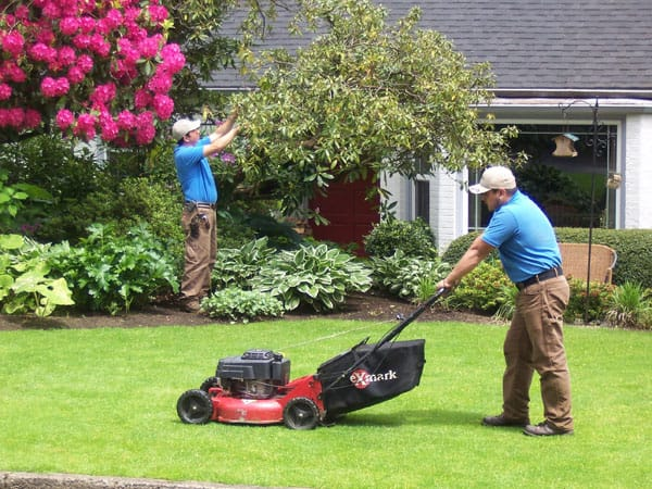 Lawn care and tree trimming